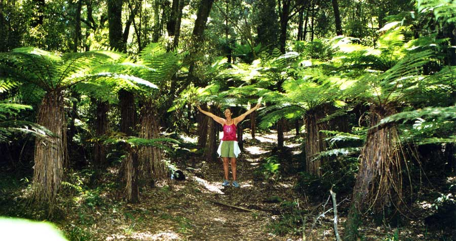 Shantara in Whirinaki Forest of New Zealand
