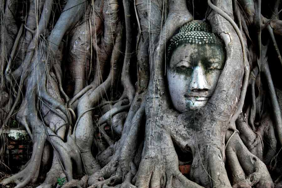 Head of Buddha Statue in the Tree Roots at Wat Mahathat, Ayutthaya